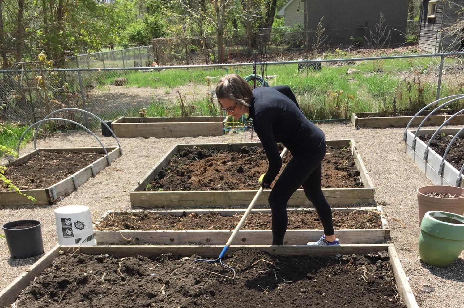 Ms. Arnstein prepping her potato bed.