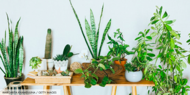Visitation+Plant+Guide%3A+Indoor+Plants