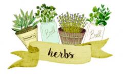 Visitation Plant Guide: Garden Herbs