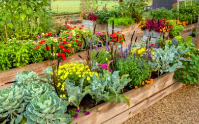 Visitation Plant Guide: Garden Prep!
