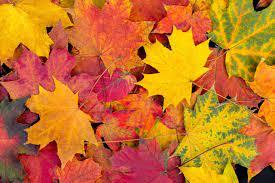 Minnesota's Fall Colors